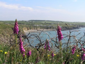 Church Bay Holiday Cottage