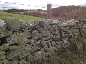 lichen covered wall on the coastal path